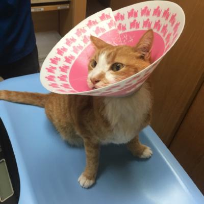 護店神貓~16歲護店神貓的看病日記– 寵物不只是寵物,更是家人